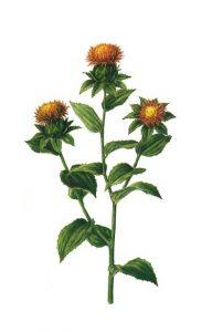 หงฮัว (Carthamus Tinctorius Flower Extract)